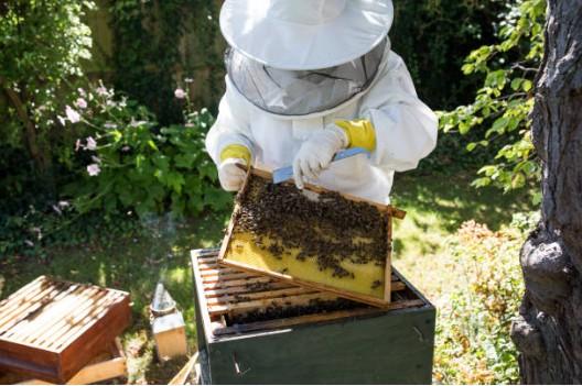abeille-jardin-ruche
