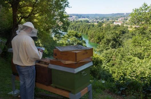abeille-ruche-jardin
